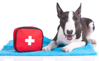 image for April is Pet First Aid Awareness Month